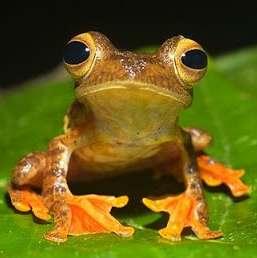 vodozemci - žaba